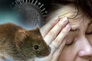 мышиная лихорадка течение болезни