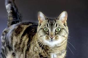 как понять что у кота глисты
