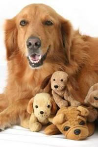 как понять что у собаки глисты